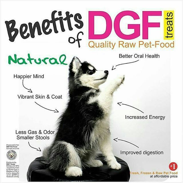 @dgf.treats -  Attention, we are re-opening soon.  Production will start in the new relocated unit, closer to distribution points. 🐕💯🐾. . . In case you haven't known.. #Benefits of regular feeding with (natural raw food) DGF TREATS for your dogs & cats ♥ , see the #infographic photo .  For DISTRIBUTION & INQUIRES, email: dogsgofit@gmail.com .  #rawfood #diet #dogfood #petfood #dogs #cats #pet #chicken #protein #minerals #calcium #iron #meat #beef #greenlea #newzealand #lamb #instapet…