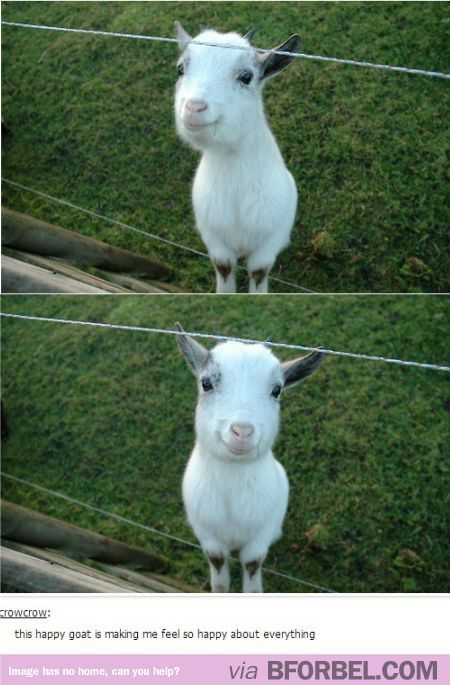 Stop What You're Doing And Look At This Happy Goat…