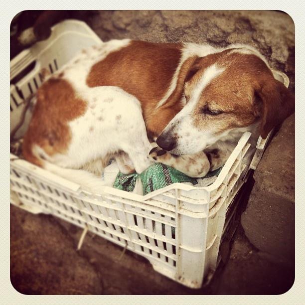 A Zeno piace riposare nella cassetta! :D
