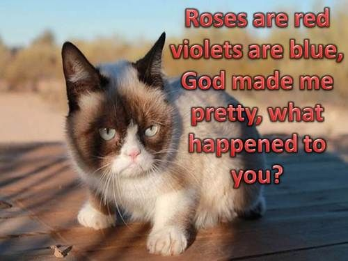 197 Best Images About Grumpy Cat On Pinterest Cats
