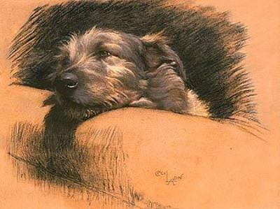 Cecil Aldin dog drawing of Mickey his Irish Wolfhound........