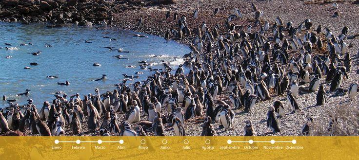 Por la mañana partimos hacia la colonia de pingüinos de la Reserva Provincial Punta Tombo. Luego de un viaje de una hora y media por rutas patagónicas, arribamos a la...