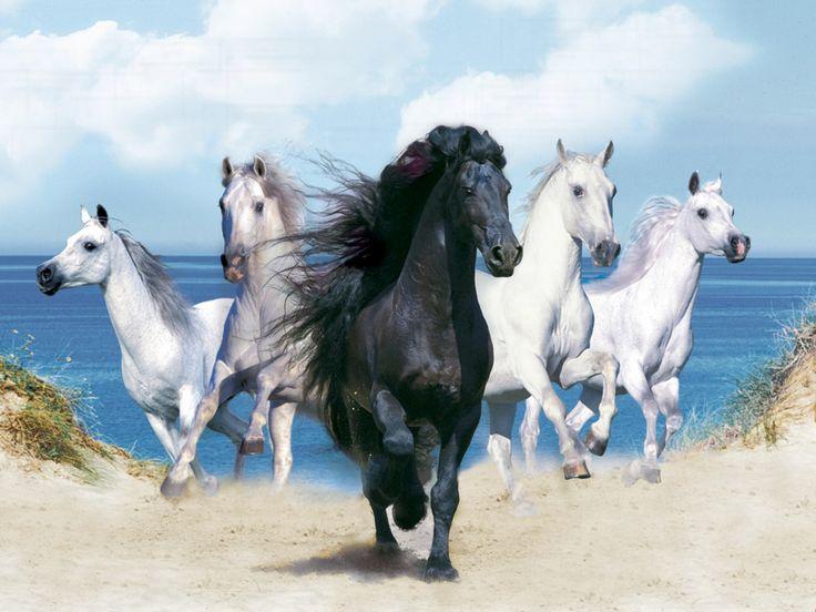 Schwarze Tapete Bestellen : Black and White Horse