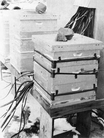 winter hive heating