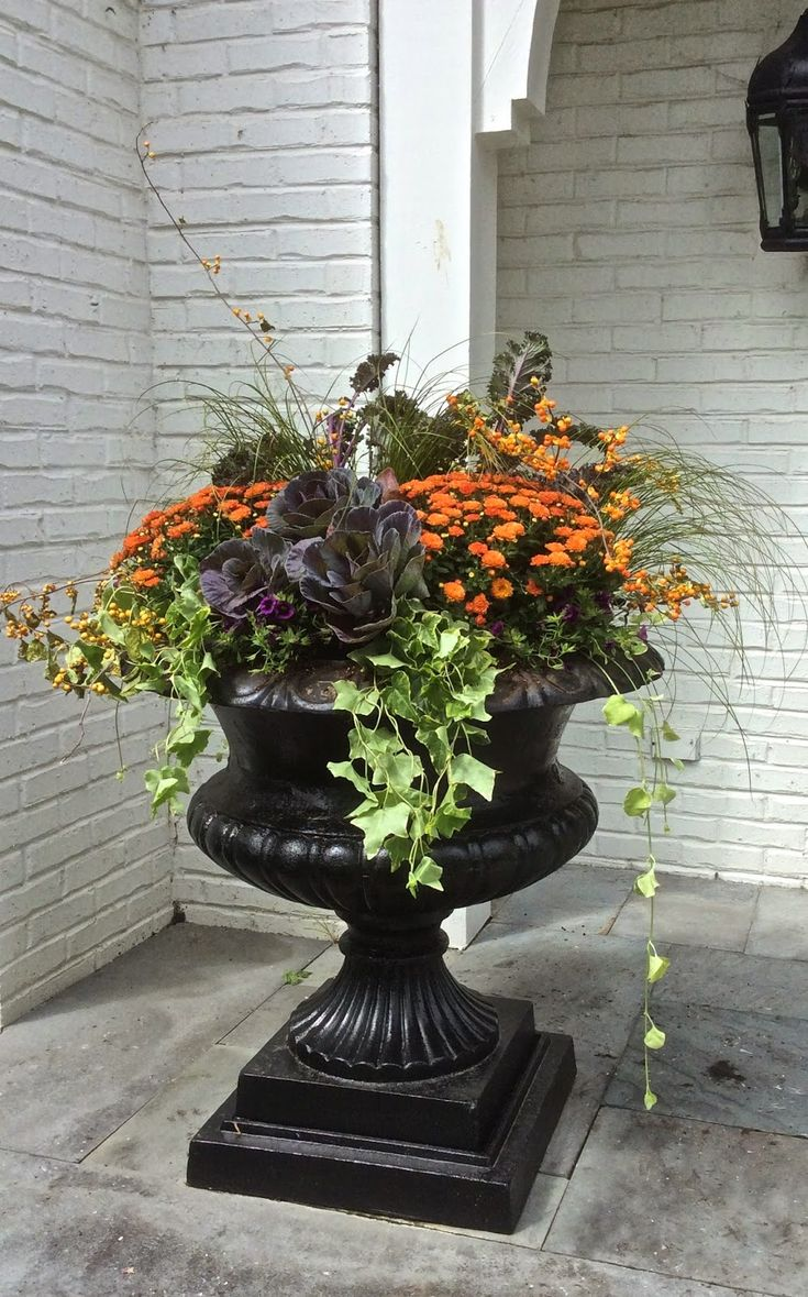 Container garden add so much to the front porch,  lots of mass of color and texture.