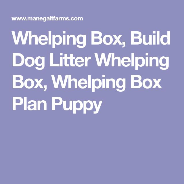Best Raising Puppy Litter Images On   Puppy Litter