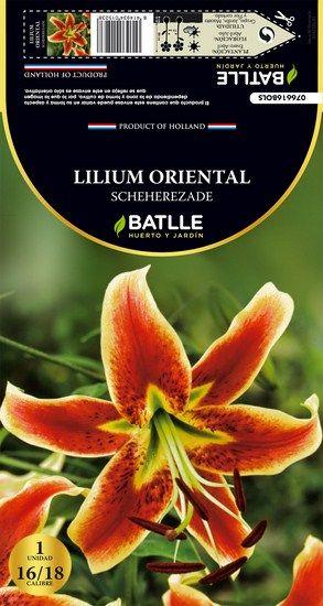 Bulbo Lilium Oriental Sheherezade                                                                                                                                                                                 Más