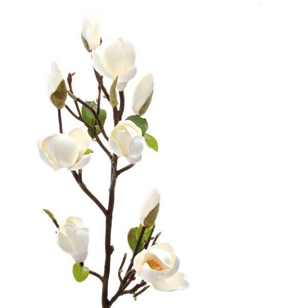 Pad Lifestyle Tall Magnolia Branch 149 Liked On Polyvore Featuring Home Home Dec Magnolia Branch White Flower Arrangements Artificial Flower Arrangements