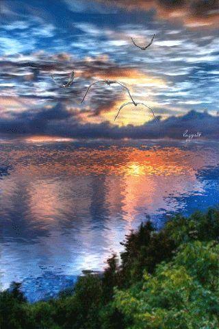 * * * * * Seagulls At Sunset, Enjoy! ~ GIF