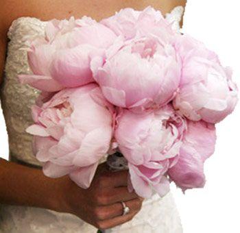 Peonies Wedding Flowers: Buy Wholesale Peonies In Bulk