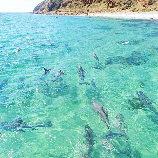 This amazing photo was snapped by Lauren Bath (who has possibly created the best job in the whole world for herself) on Kangaroo Island which is off the South Australian coast. The tour is with Kangaroo Island Marine Adventures!