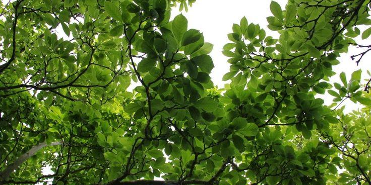 SKYGGEN ER GOD VED OS - The shade garden