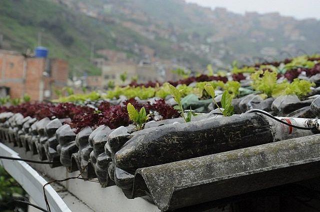 Techos que dan comida, un proyecto convierte en huertas ecológicas las azoteas de casas humildes