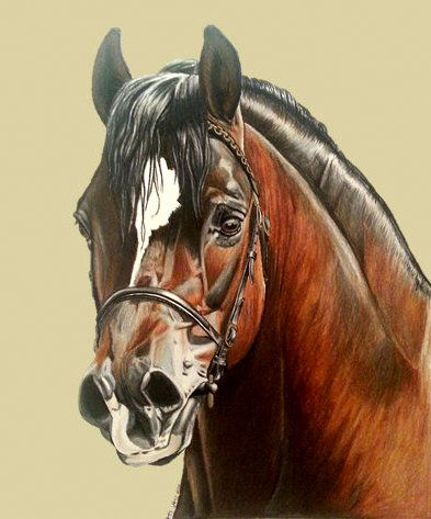 'Shankley King' A3 using Faber-Castell Polychromos