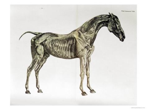 Third Anatomical Table Print