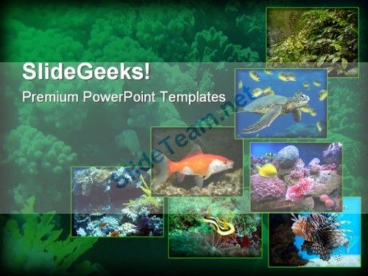 Best Animals Powerpoint Templates Themes Backgrounds Images On