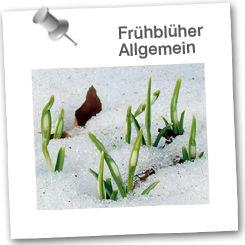 Frühblüher - EduGroup