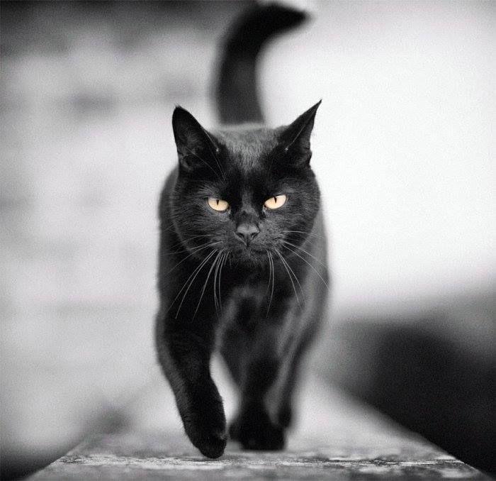 картинки с черной кошечкой нас изделия для