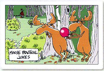 Moose Practical Jokes Cartoon Magnet