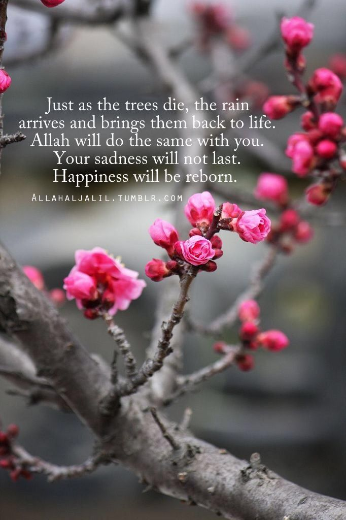 Inshallah we can all feel the rebirth of our happiness after sad times.  #islamicquotes #happiness