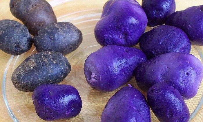 A lila burgonya termesztése nagyon jól jövedelmező üzletté alakult az utóbbi időben. A szakemberek számításai szerint még azok a személyek is sokat kereshetnek vele, akik[...]