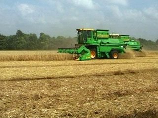 пшеница поле сельское хозяйство уборка  комбайн