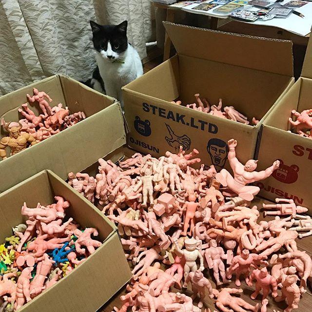 台風の日はキン消し祭り‼︎ #キン肉マン#kinnikuman#キン消し#台風 #kinkeshi#パンクドランカーズ#toy#猫 #punkdrunkers#cat#catstagram#愛猫 #typhoon#collection#party#祭り#整理整頓