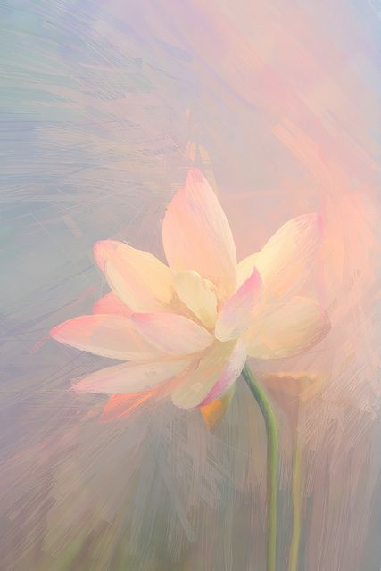 Lotus Flower Paintings / Photographic images using Akvis Oil Paint Filter | by Bahman Farzad