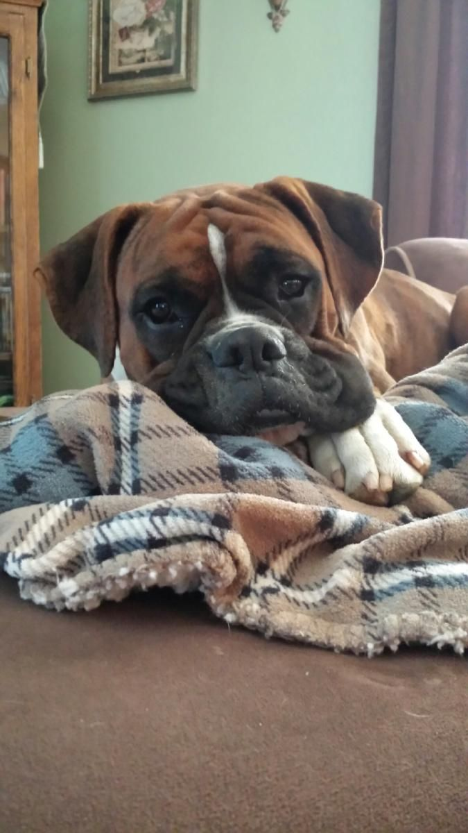 Boxer Lovers : Photo