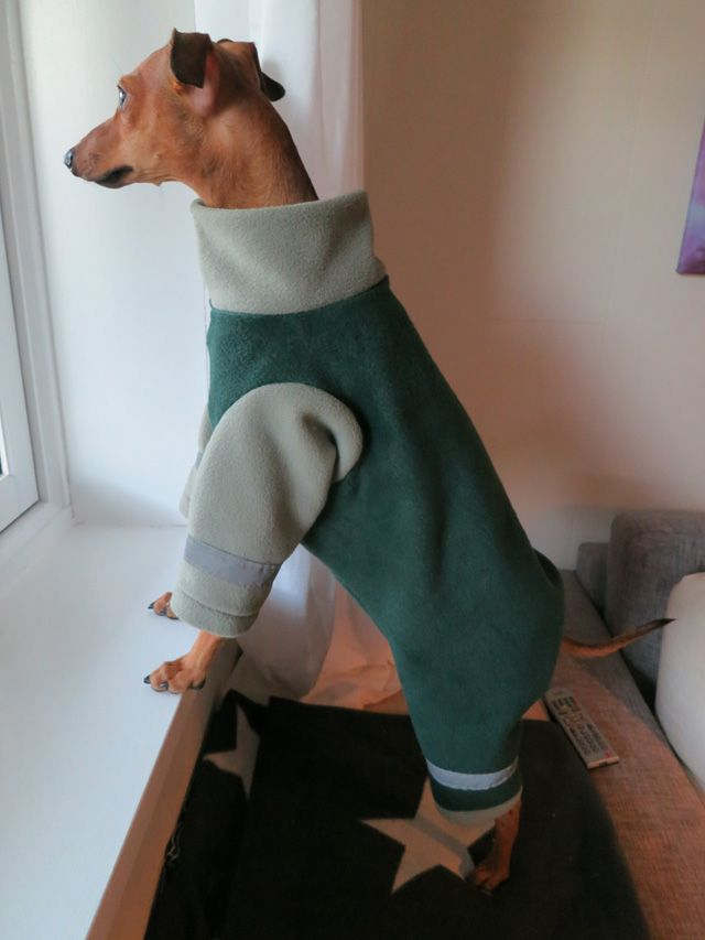 Pajamas — Italian Greyhound Clothing Tutorials