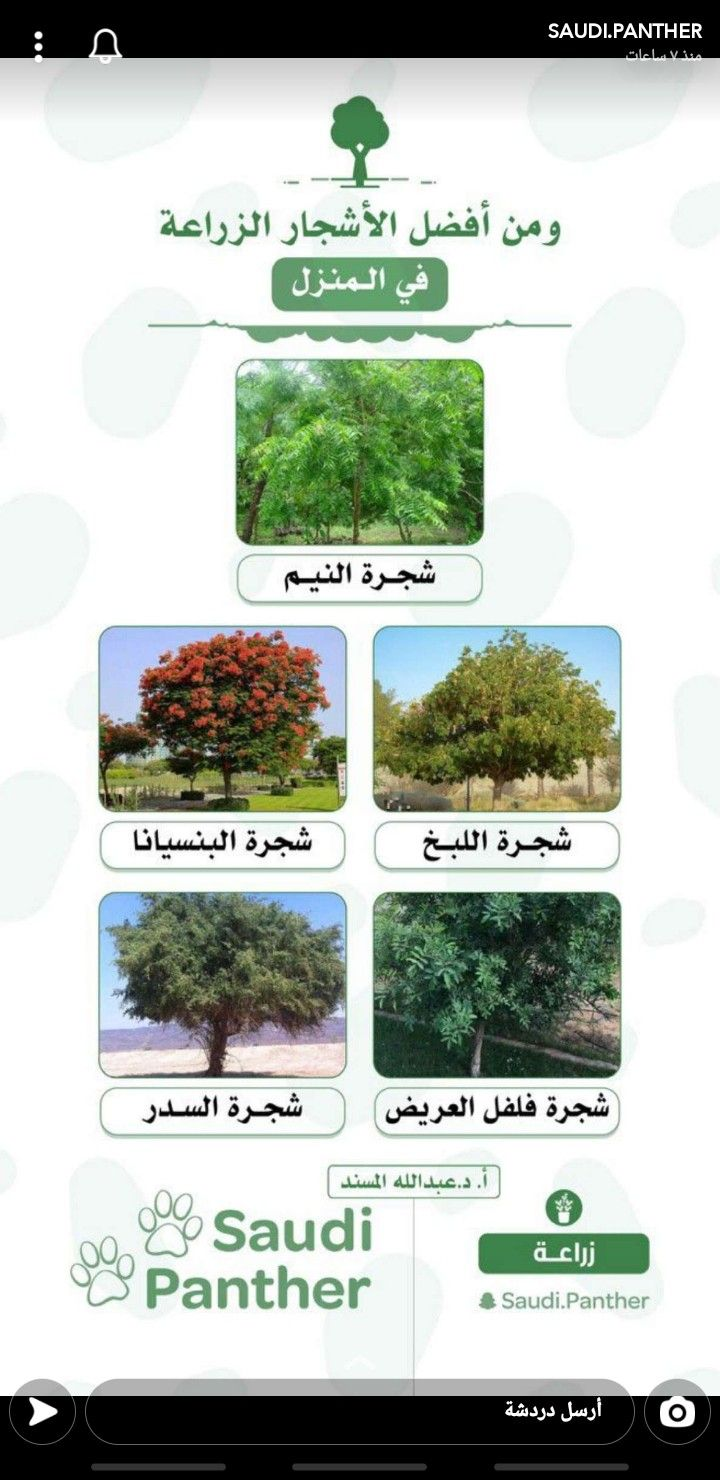 شجرة النيم الهندية قد تكون العلاج لسرطان البنكرياس أهـم خـبـر Sacred Tree Plants All About Plants
