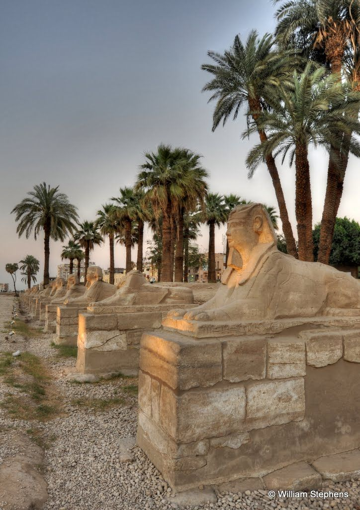 A row of sphinxes,   Luxor  Egypt (Kebash road connecting Luxor & Karnak temples)