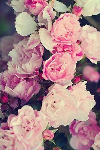 Flores!!