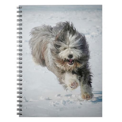 Photo Notebook (80 Pages B&W) Bearded collie running in the snow