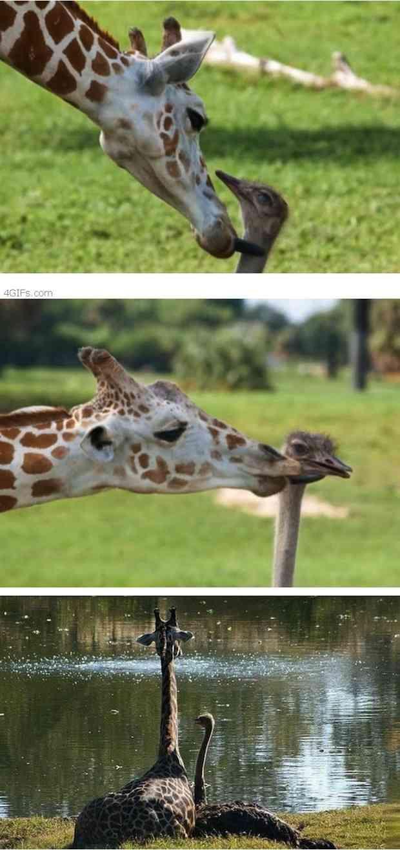 Excelentes momentos de amistades animales                                                                                                                                                                                 More