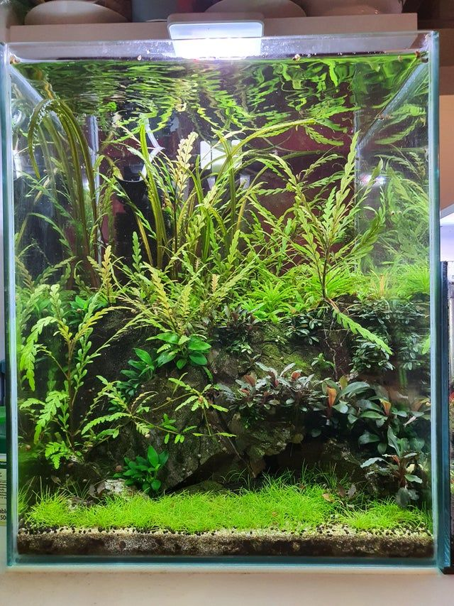 Harga Bonsai Mini Aquascape Desain Dekorasi Rumah