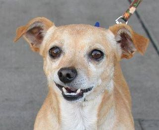 Senior Rescue Dogs In The East Bay Area