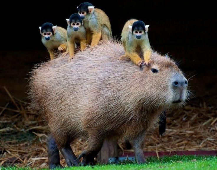 Симбиоз животных в картинках