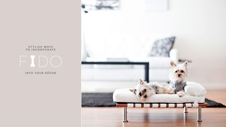 Puppy Love The Best Decorating Ideas For Your Family S