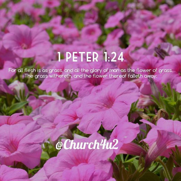 1 Peter 1-24 For all flesh is as grass and all the glory of man as the flower of grass. The grass withereth and http://ift.tt/2zI8KT5pic.twitter.com/XP0IZJVDoF  1 Peter 1-24 For all flesh is as grass and all the glory of man as the flower of grass. The grass withereth and http://ift.tt/2zI8KT5 http://pic.twitter.com/XP0IZJVDoF