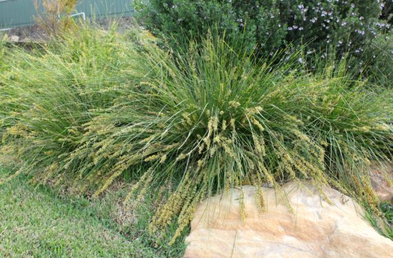 248 best landscape gardening plants images on pinterest native top 10 rain garden plants for nsw altavistaventures Gallery