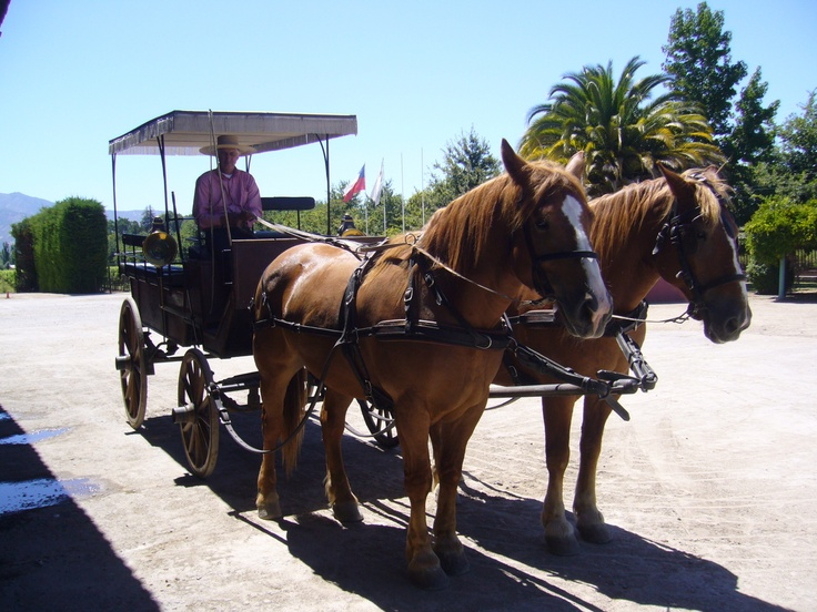 Colchagua Valley, Wine Region, Chile http://www.vivaexpeditions.com/south-america-tours/chile-travel/lakes-district-discovery-santiago-to-bariloche