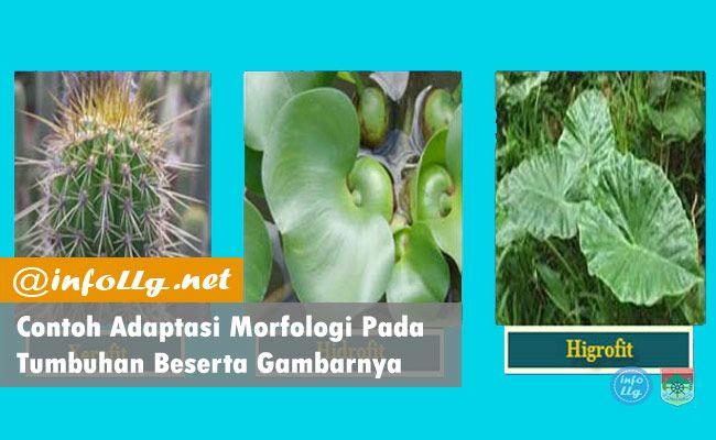 Contoh Adaptasi Morfologi Pada Tumbuhan Beserta Gambarnya Adaptasi Morfologi Adalah Salah Satu Adaptasi Yang Dilakukan Oleh Makhluk Adaptasi Gambar Pengikut