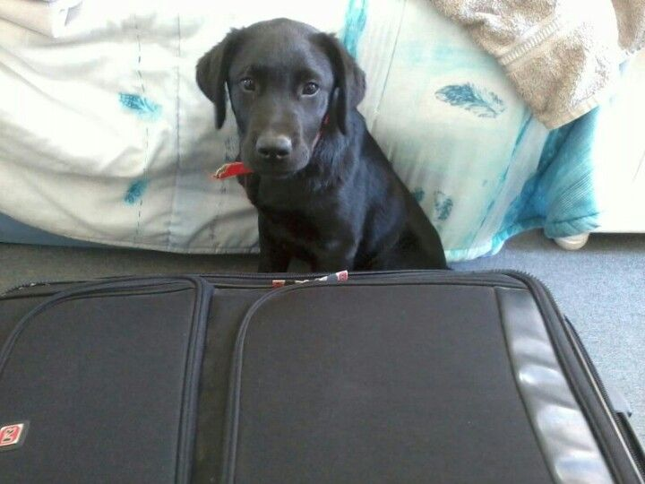 Not wanting me to leave...