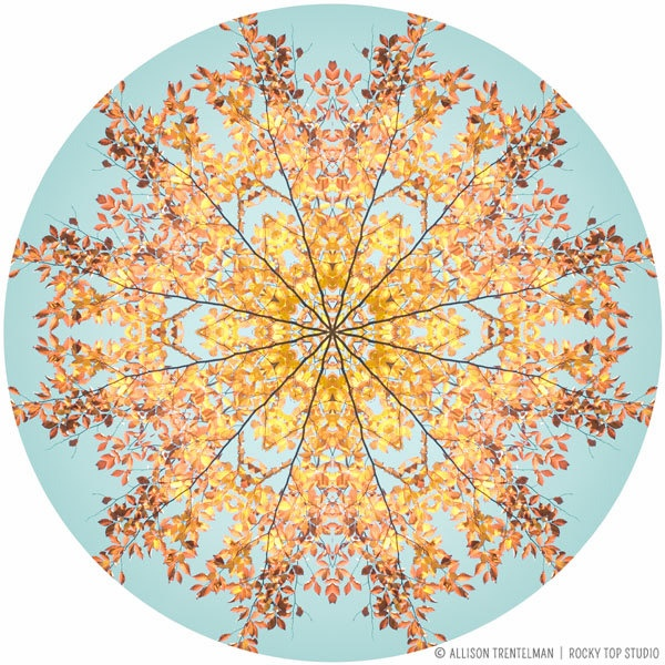 Sunny Yellow And Aqua Home Decor Nature Mandala Wall Art Abstract Photography Fine Giclee Print
