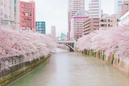 190 best cherry blossom images on pinterest blossom for Bremerton tattoo shops