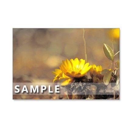 5枚セットのポストカードです。春浅い季節に、私たちを楽しませてくれる可憐な花たち。フクジュソウ、ギョリュウバイ、雫のようなスノードロップ、マグノリア、コブシの...|ハンドメイド、手作り、手仕事品の通販・販売・購入ならCreema。