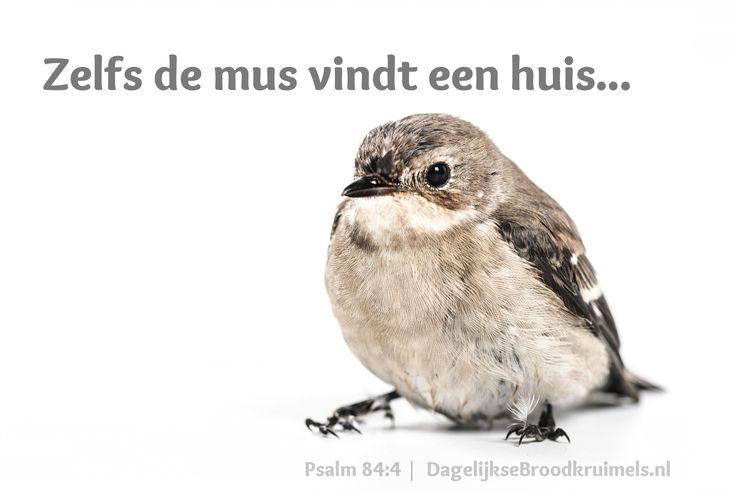 Zelfs de mus vindt een huis en de zwaluw een nest waarin ze haar jongen neerlegt, bij uw altaren, HEER van de hemelse machten, mijn koning en mijn God. Psalm 84:4  #Bemoediging, #Hart  https://www.dagelijksebroodkruimels.nl/psalm-84-4/