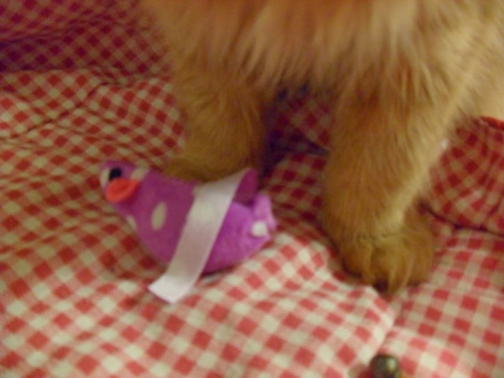 Cats got new toys