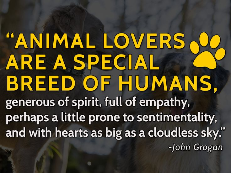 Image result for animal lover quotes